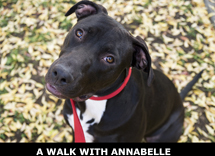 Walk with Annabelle